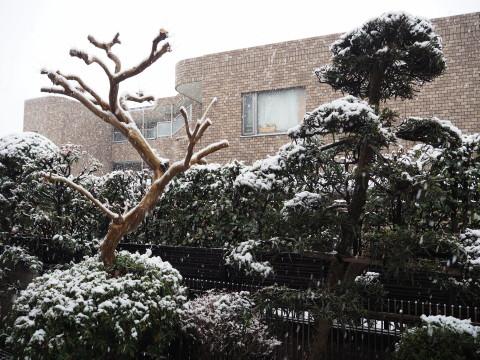 h27,1雪の朝