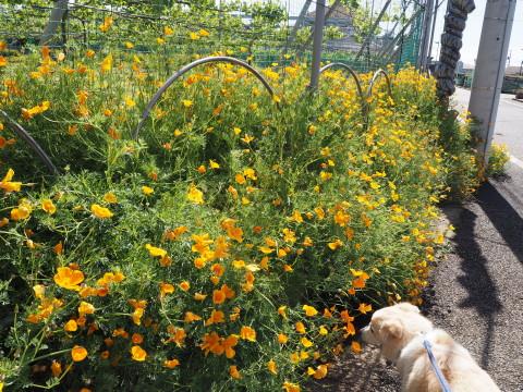h27,5オレンジの花とアロー