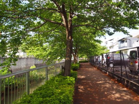 h27,5新緑散歩