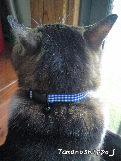 毛並みがボサボサな猫(たま)10歳当時