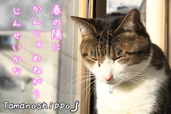 人生を悟った猫(出窓のちびニャン)