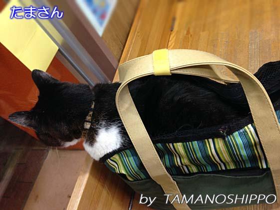 お外を眺める猫(待合室から)