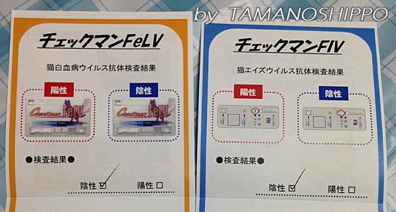検査結果カード(FIV、猫白血病)中身