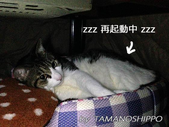 コタツの中で寝てる猫2(ちび)