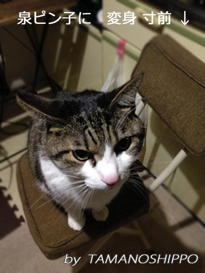 お腹が空いた猫(ちび)