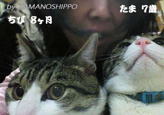 猫と三人で(たま&ちび)