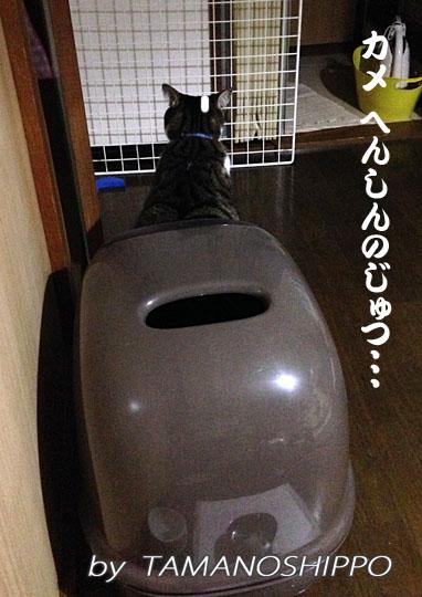 オシッコ中の猫(ちび 後ろ姿)
