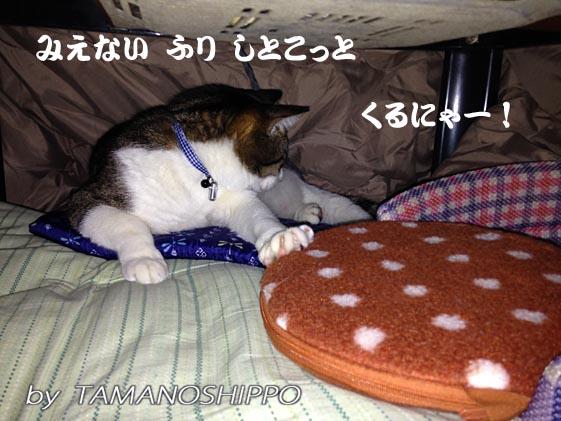 湯たんぽを嫌がる猫(ちび)