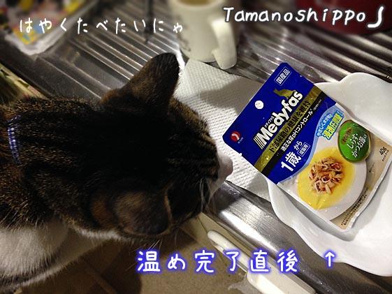 メディファスさんのスープパウチ(温め完了)を待つ猫(ちび)