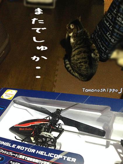 京商 ブラックスワローと猫(ちび)