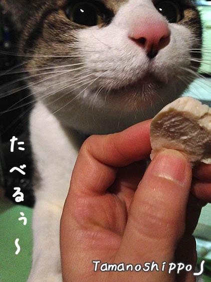 ささ身(鶏肉チキン)を食べる猫(ちび)