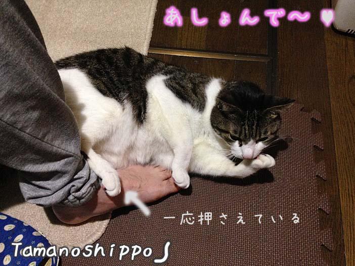 足にまとわりつく猫(ちび)