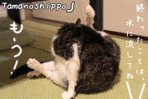 お風呂のあと、体中をなめる猫(ちび)