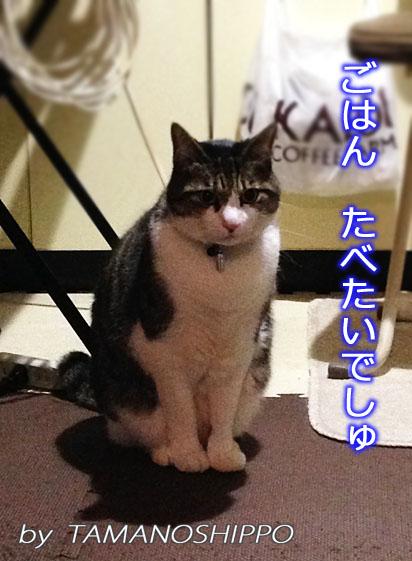 ご飯を待っている猫(ちび)