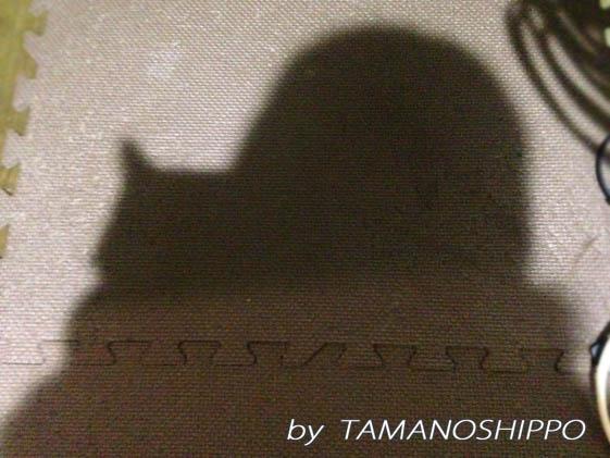寄り添う猫(ちび)影