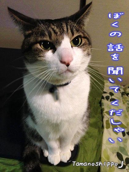 文句を言う猫(ちび)
