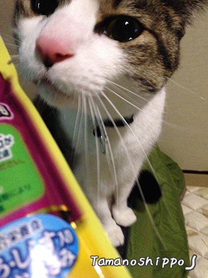 パウチを欲しがる猫(ちび)