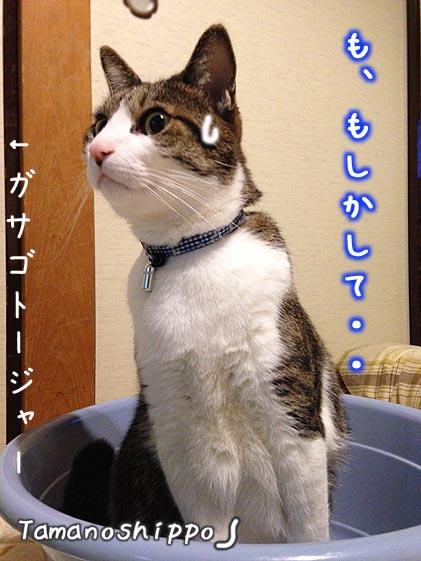 タライの中で嫌な予感がする猫(ちび)