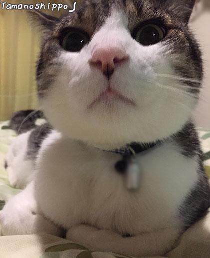 おすまし猫(ちび)