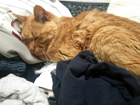 洗濯物かえして