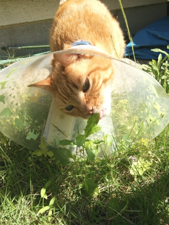 草抜きをする猫