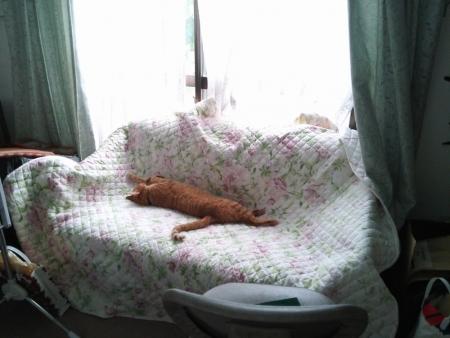 のびのび昼寝1