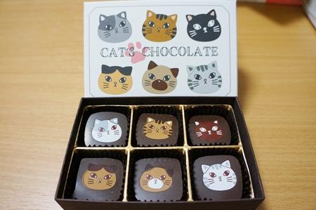 猫のチョコ