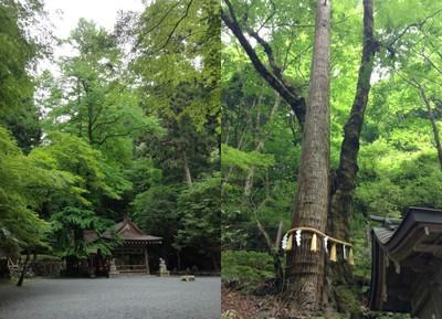 日本20151
