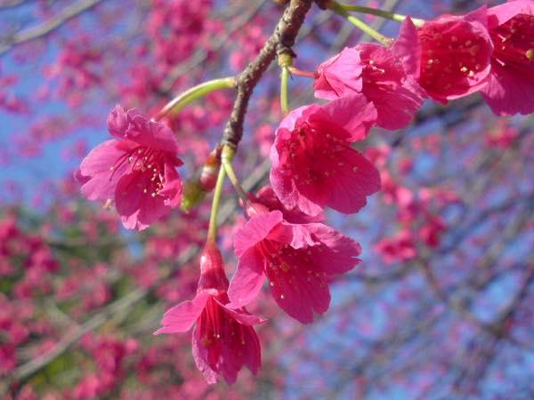 桜sn3d0061