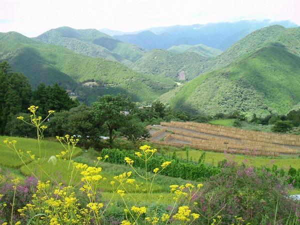 田舎の風景3月