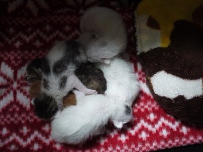 生後3日の乳飲み子4