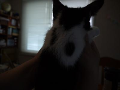うしお君、背中に猫