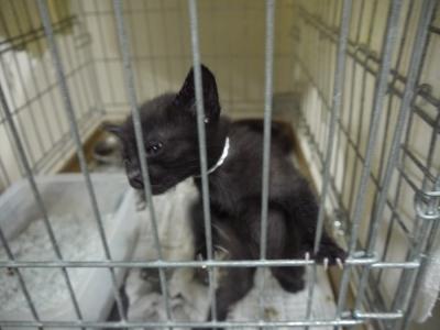 黒猫兄弟①