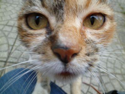 猫ブログですから☆