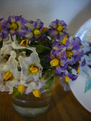 ジャガイモの花w