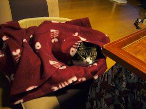 猫ベッドをデリバリー?