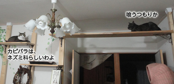 DSC05940-2.jpg