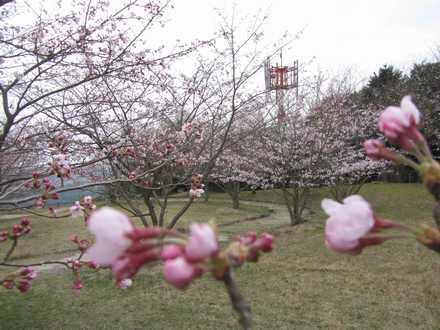 小城展望公園 4