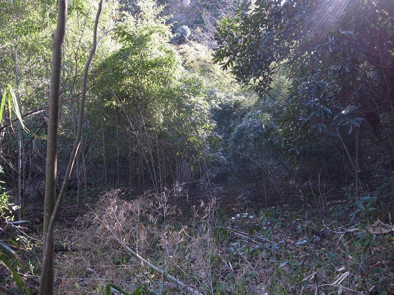 清掃前の野北の森