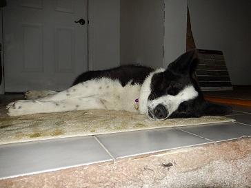 Tama sleeping