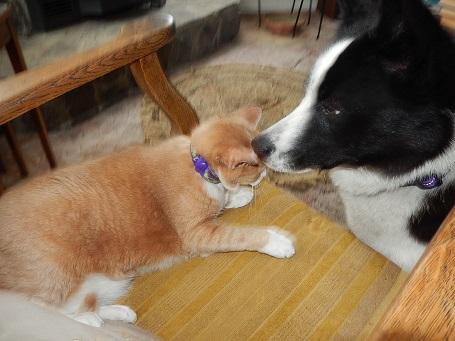 with cat,winne