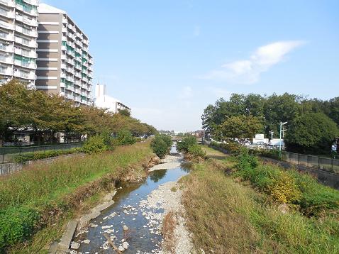 空堀川の第三天王橋@東村山市G ふれあい橋方面