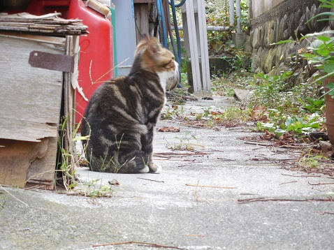 通りすがりに見かけた猫(748)