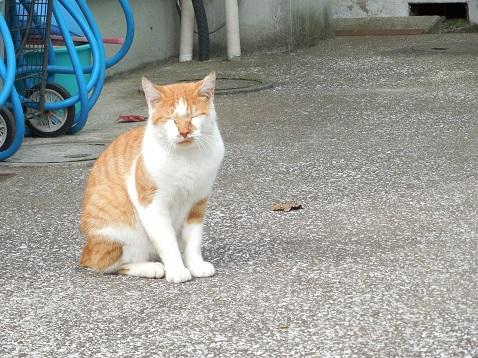 通りすがりに見かけた猫(749)