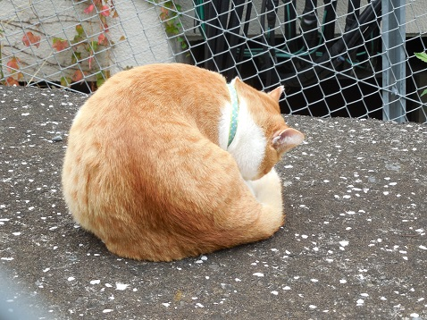 通りすがりに見かけた猫(750)