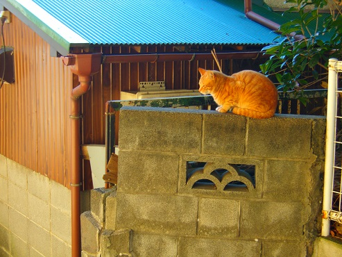 通りすがりに見かけた猫(751)