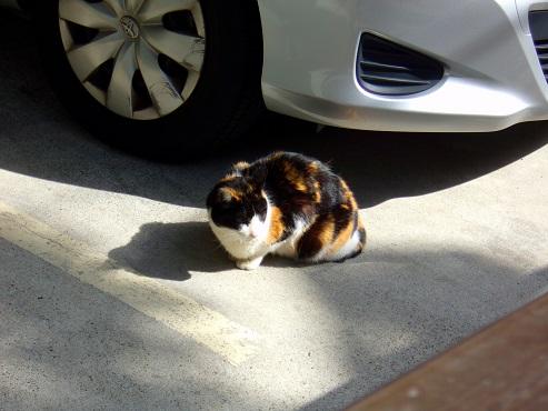 通りすがりに見かけた猫(752)