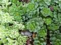 ナンフェア 多肉植物