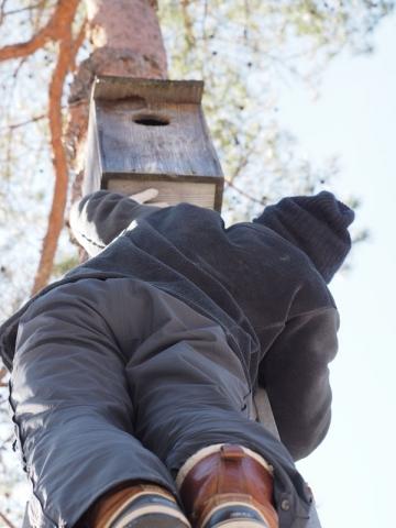 巣箱に登る150216