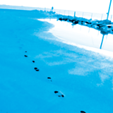 Oarfish Sea